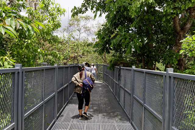 Jardin botanique de la reine Sirikit (7 sur 138)