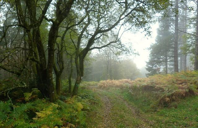 Le chemin en forêt.......