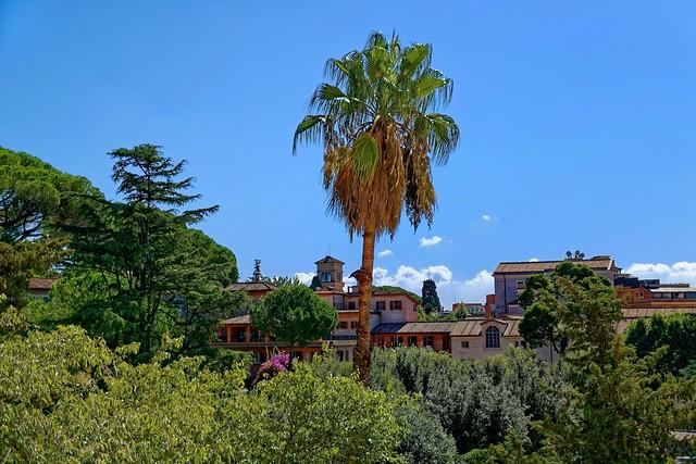Medici Villa - Rome /   A view through the window