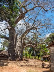 LR Zanzibar 2019-030414