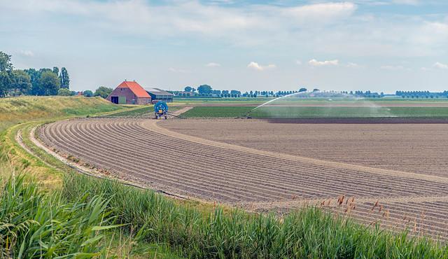 Sprinkling dry potato field in the Netherlands
