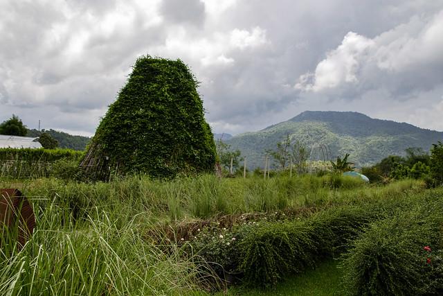 Jardin botanique de la reine Sirikit (136 sur 138)