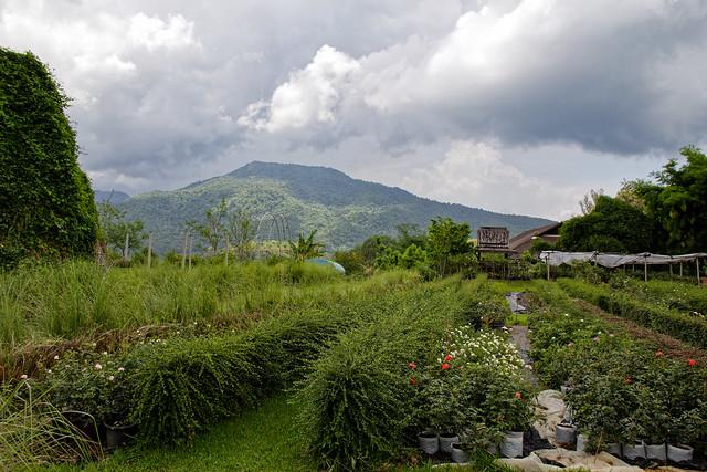 Jardin botanique de la reine Sirikit (135 sur 138)