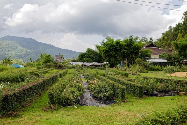Jardin botanique de la reine Sirikit (132 sur 138)