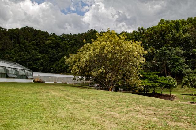 Jardin botanique de la reine Sirikit (125 sur 138)
