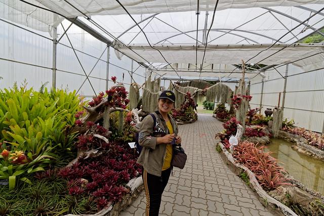 Jardin botanique de la reine Sirikit (84 sur 138)