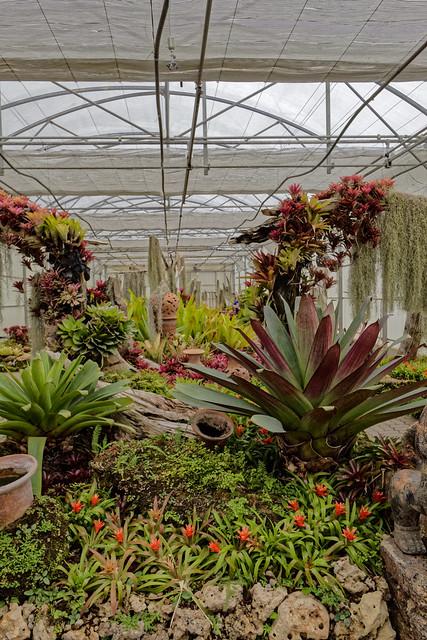 Jardin botanique de la reine Sirikit (83 sur 138)