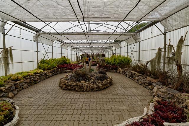 Jardin botanique de la reine Sirikit (78 sur 138)