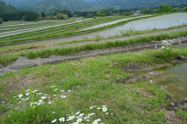 宕陰の棚田4・Rice Field of Toin