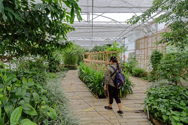 Jardin botanique de la reine Sirikit (69 sur 138)