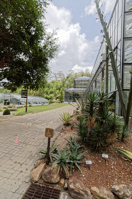 Jardin botanique de la reine Sirikit (67 sur 138)