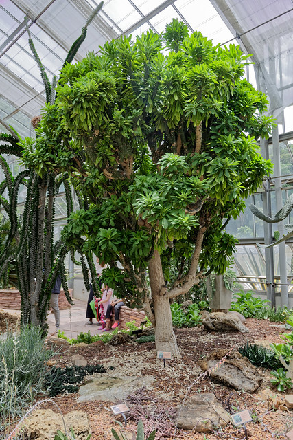 Jardin botanique de la reine Sirikit (58 sur 138)