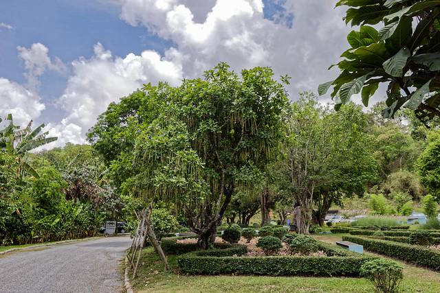 Jardin botanique de la reine Sirikit (40 sur 138)