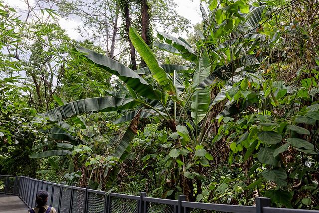 Jardin botanique de la reine Sirikit (25 sur 138)