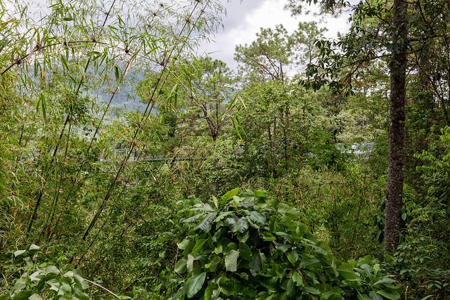 Jardin botanique de la reine Sirikit (24 sur 138)