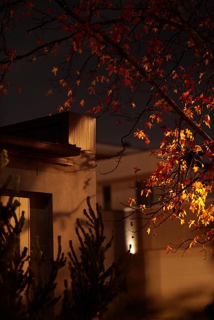 Autumn_MG_2647