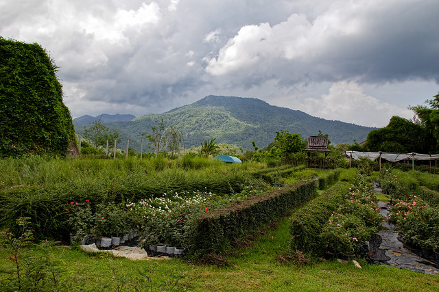 Jardin botanique de la reine Sirikit (131 sur 138)