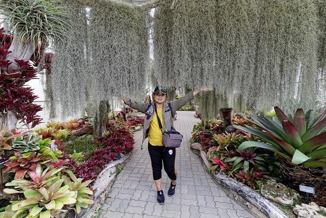 Jardin botanique de la reine Sirikit (86 sur 138)