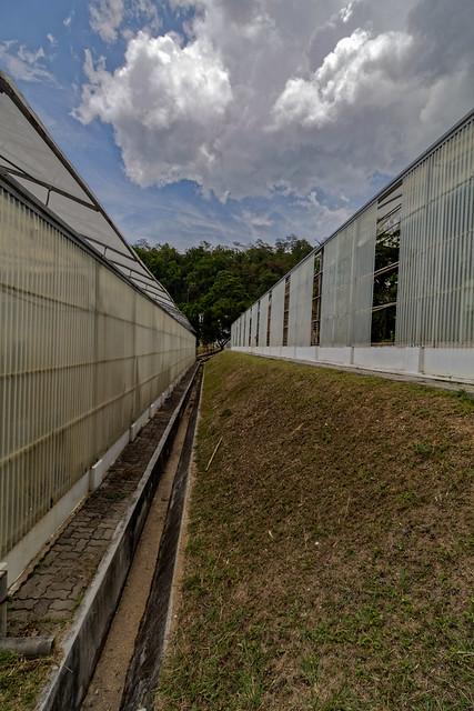 Jardin botanique de la reine Sirikit (76 sur 138)