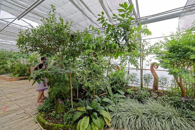 Jardin botanique de la reine Sirikit (71 sur 138)