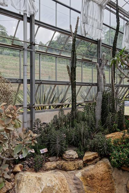 Jardin botanique de la reine Sirikit (51 sur 138)