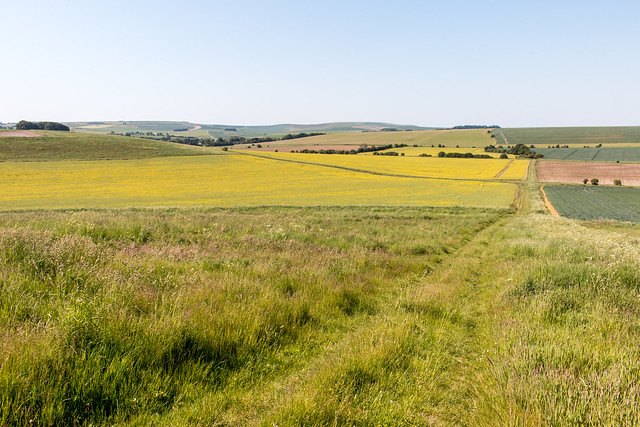Track from Avebury Down to Waden Hill