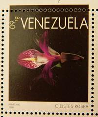 Cleistes rosea