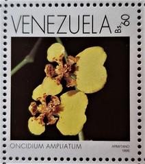 Oncidium ampliatum