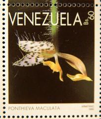 Ponthieva maculata