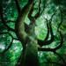 Jödnar Tree
