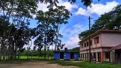 Nature   School Ground