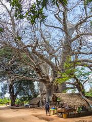 LR Zanzibar 2019-030424