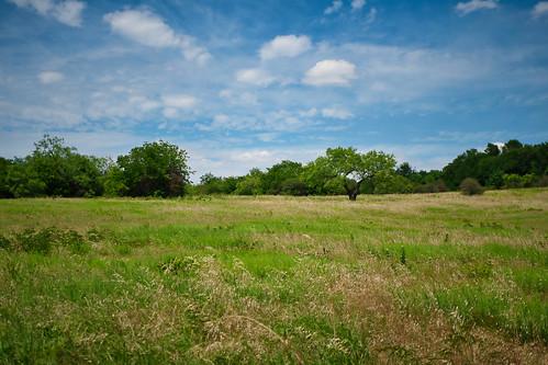 texasblacklandprairie texas arborhillsnaturepreserve prairie bluesky clouds landscape