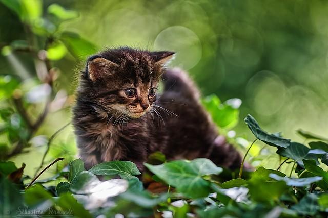 Kitten too cute N°2 - Chaton trop mignon N°2