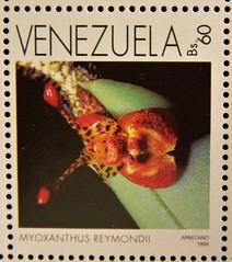 Myoxanthus reymindii