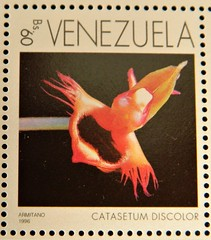 Catasetum discolor