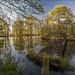 20200518. Matsalu manor park. 5621-1.