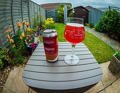Canopy's Passionfruit & Raspberry Gose Beer (4.5%) (Olympus OM-D EM1.2 & M.Zuiko 8mm Fisheye Prime) (1 of 1)