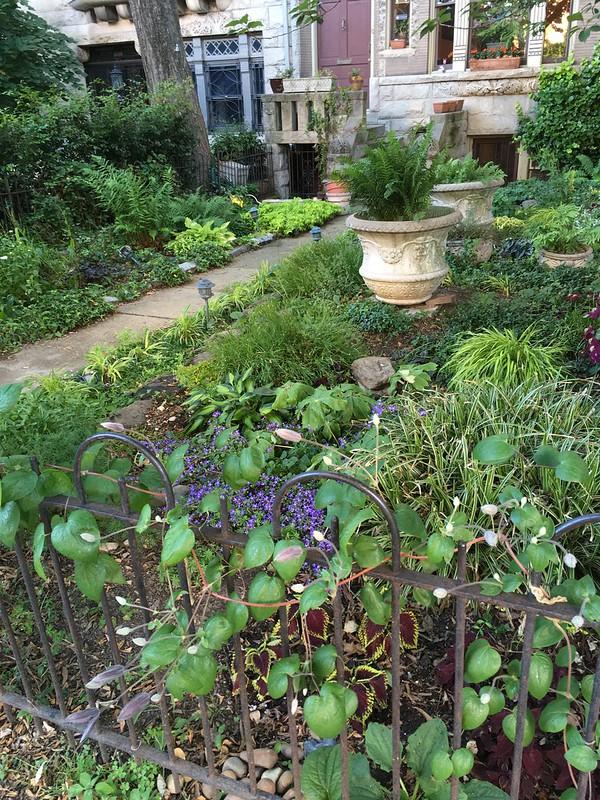 Favorite garden June 2020