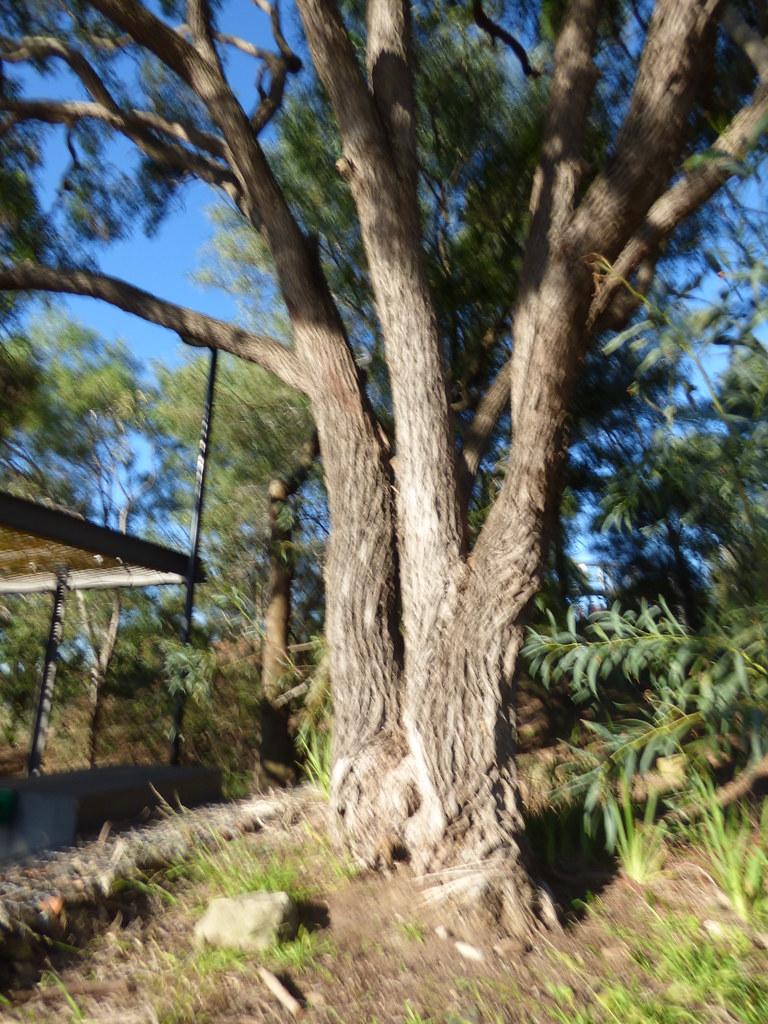 Ballast Point, Birchgrove, NSW 2020