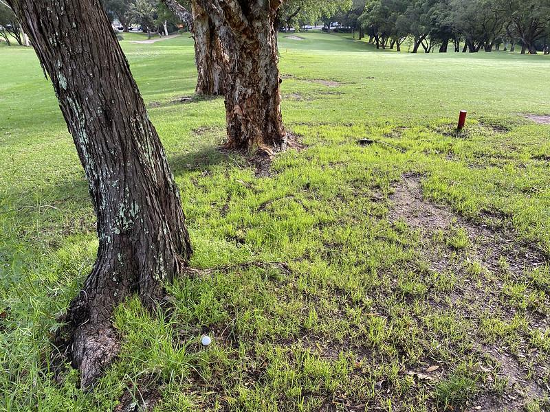 Cammeray Golf Club: hole 4 rough