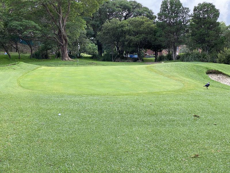 Cammeray Golf Club: hole 1 green