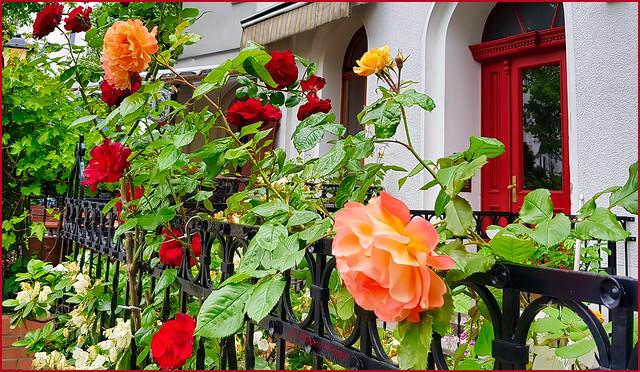 Freitagsblümchen am Zaun