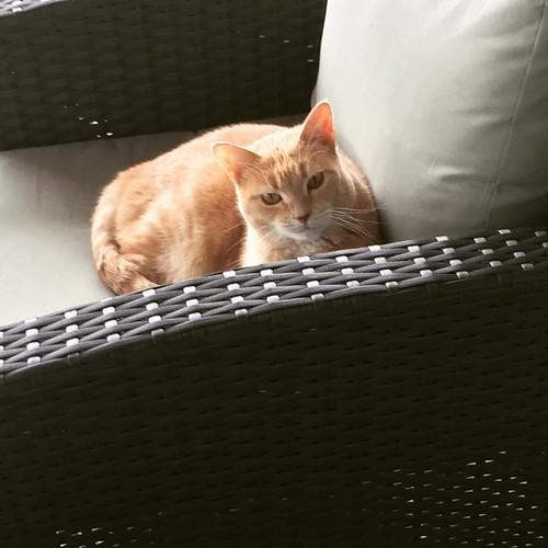 gato encontra um local ensolarado no convés
