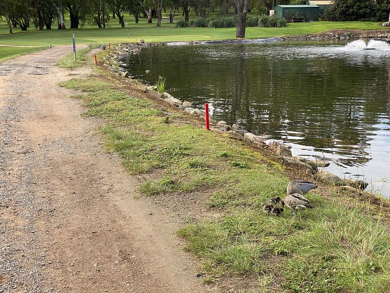 Cammeray Golf Club: hole 6 water hazard