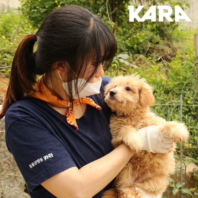 KARA: Paju Factory Dog Support Project Update 6/5/2020