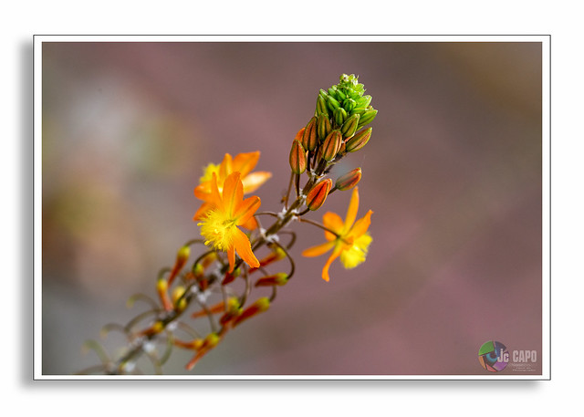 """""""Dans un grain de sable voir un monde Dans chaque fleur des champs le Paradis.""""  De William Blake"""