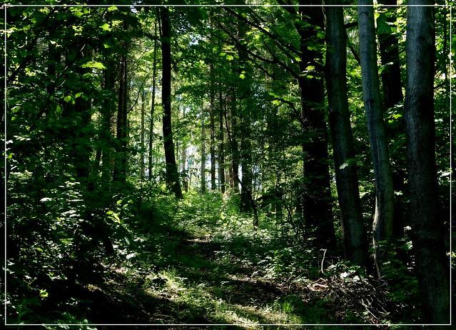 Wiosna w lesie.