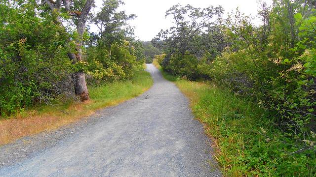 Mt. Tolmie Trail