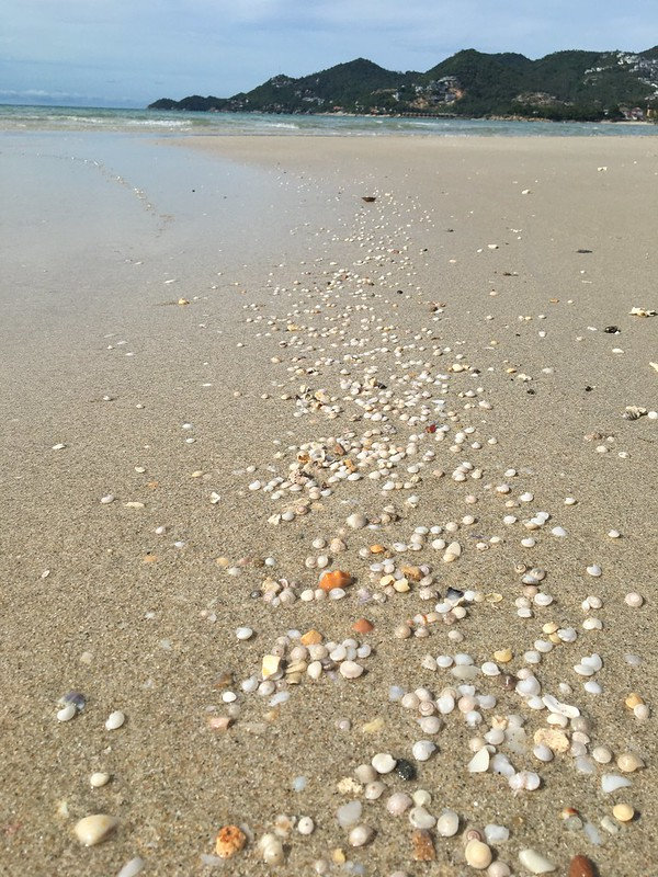 サムイ島 チャウエンビーチ パブリックエントランス 貝殻 chaweng beach koh samui